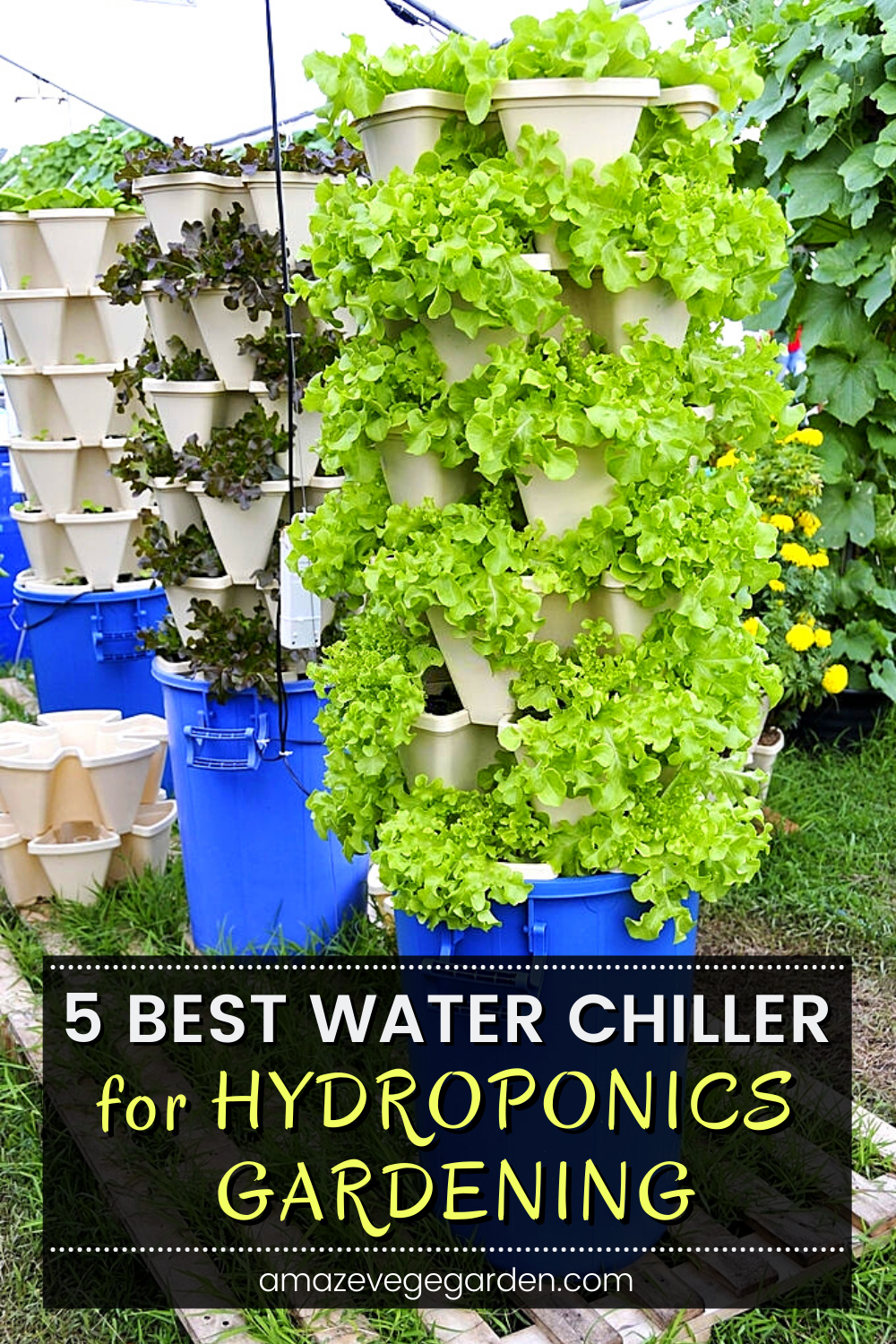 There is 5 best water chiller you can consider to control your hydroponic gardening temperatures. We do not want warm temperatures because warm temperatures will increase the chances of bacterial growth which will cause root rot and other problems. So keeping your water temperature under control might be one of the simplest things you can do.